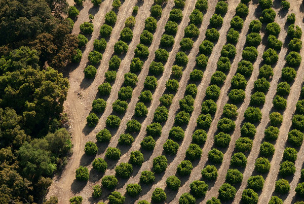 Orchards_2
