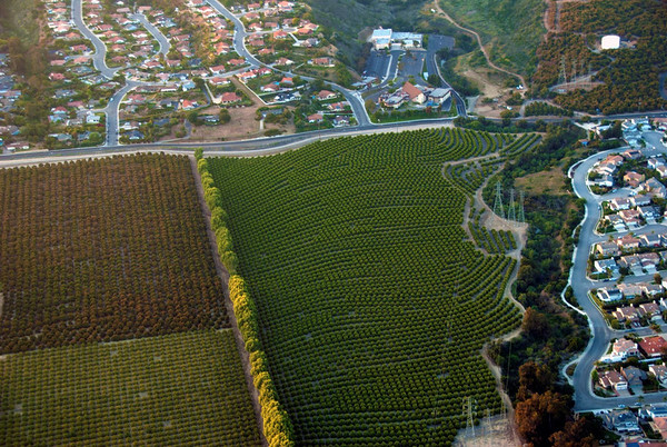 Orchards_4