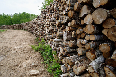 Logs in pile Log Pile