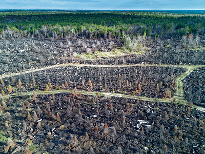 Burned forest after clear cut logging Annapolis County Nova Scotia