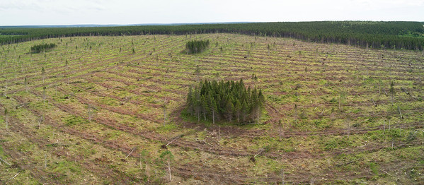 Aerial very large clearcut clear cut logging Cape Breton highlands south of national park