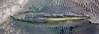 MIP AERIAL MIDDLETON SHIPWRECK HIGGINS BEACH  SCARBOROUGH ME-0760