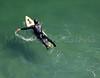 MIP_AERIAL-SURFERS_YORK_ME-4676