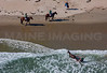 MIP AERIAL HORSE IN SURF YORK ME-5034