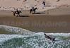 MIP AERIAL HORSE IN SURF YORK ME-5034