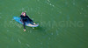 MIP AERIAL SURFERS PADDLE BOARDERS LONG SANDS BEACH YORK ME-4986