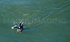 MIP AERIAL SURFERS PADDLE BOARDERS LONG SANDS BEACH YORK ME-5013