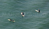 MIP AERIAL SURFERS PADDLE BOARDERS LONG SANDS BEACH YORK ME-4877