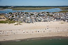 MI-HAMPTONBEACH_NH_9679