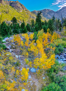 Deadman Creek Morning Fall Colors Panorama Aerial - Sonora Pass-3