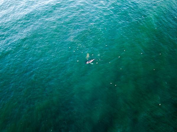 Whale - Big Sur-2