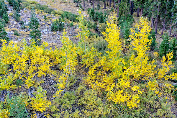 Deadman Creek Morning Fall Colors Aerial - Sonora Pass
