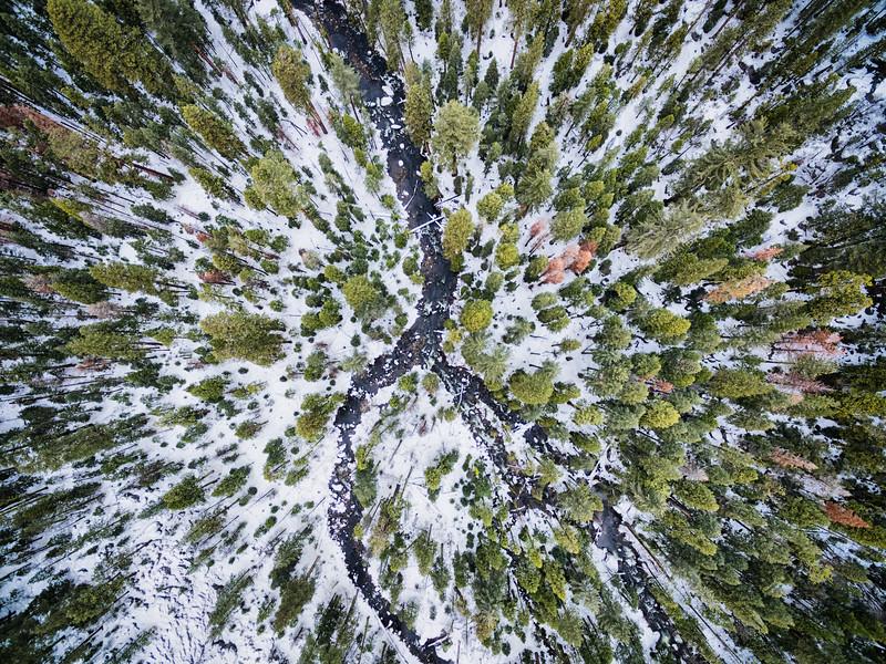 Pinecrest Aerial