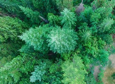 Washington Tree Canopy