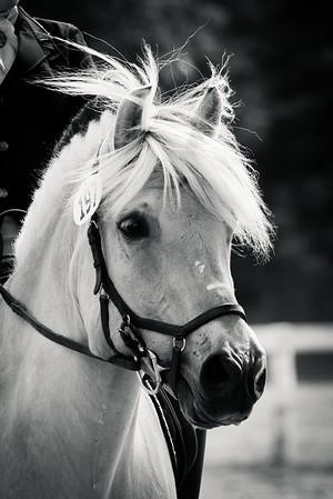 Stockade Polo & Saddle Club - 07-23-2017
