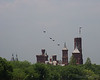 Four P-51 Mustangs Came in Low over the Smithsonian Castle