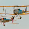 Tiger Moths