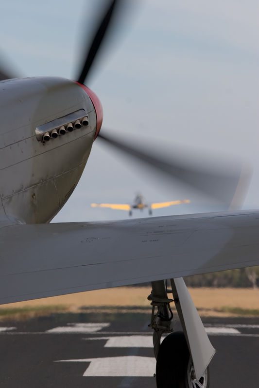 Mustangs eat Harvards for breakfast! Lucky fluke to catch the T-6 through the Merlin's prop.