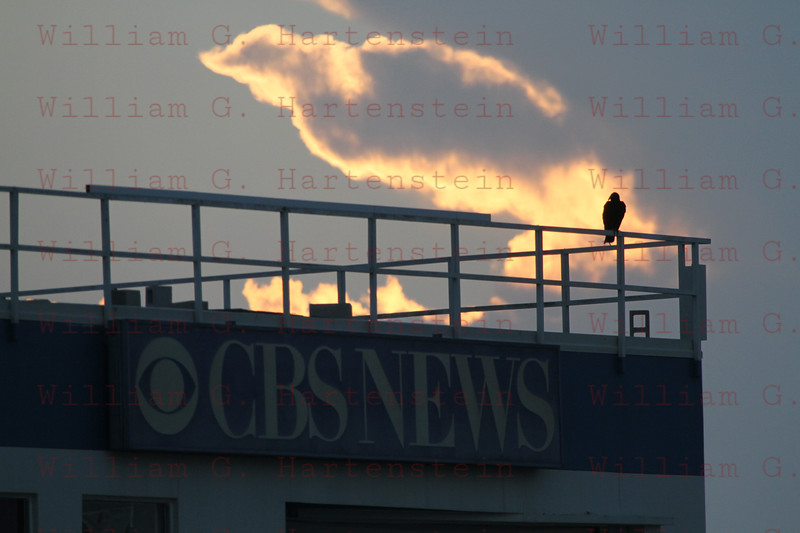 After STS-133 Discovery last Mission a bird on the Roof of the CBS building with a Cloud look a like.