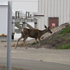 A deer survived the launch inside SLC-6 Vandenberg AFB. Calif. Aug. 28, 2013