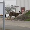 A deer survived the launch inside SLC-6 Vandenberg AFB. Calif. Aug. 28, 2013