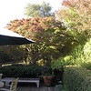 After- The canopy has been thinned to let light below.  This garden was originally designed by Ron Herman