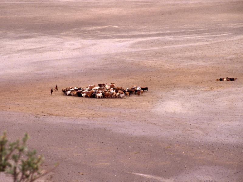 22  עדר מסאי- מגדי 2.jpg