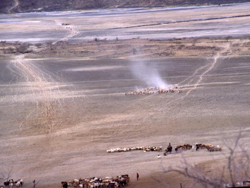 23  עדר מסאי- מגדי.jpg