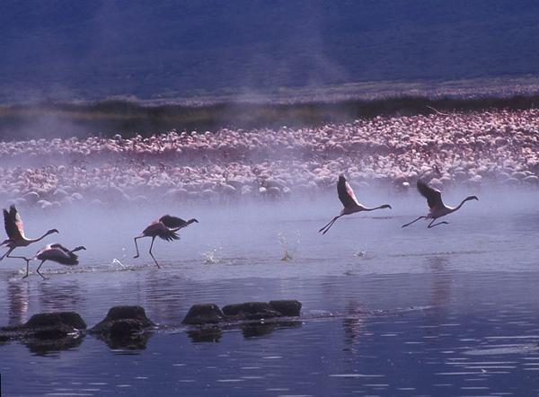 flamingo bogoria.jpg
