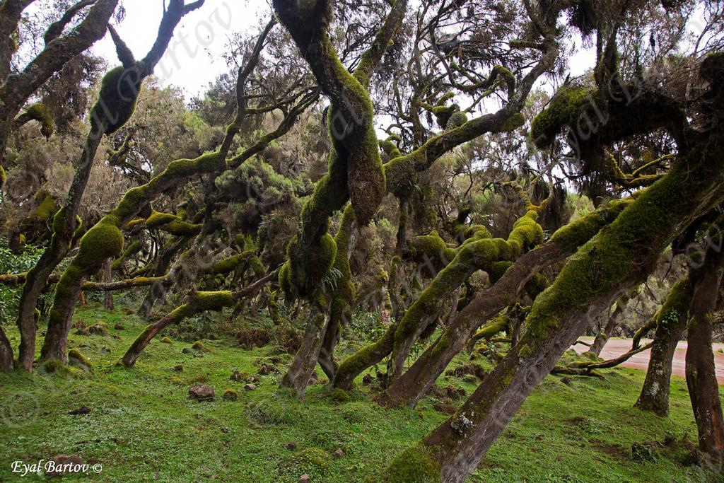 Harena Natural Forest