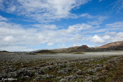 Sanetti Plateau ( Bale Mountains) . Typical here are the afroalpine meadows and the  4000 m NN