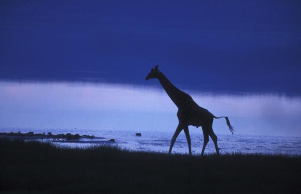 Kenya - קניה