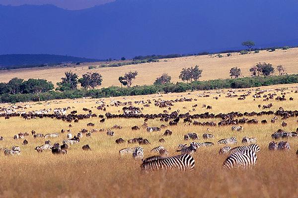 masai mara kanya.jpg