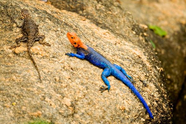 Reptiles & Amphibian , זוחלים ודוחיים