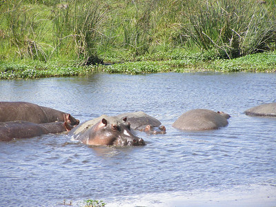 The hippo pool