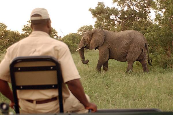 2 elephant 23