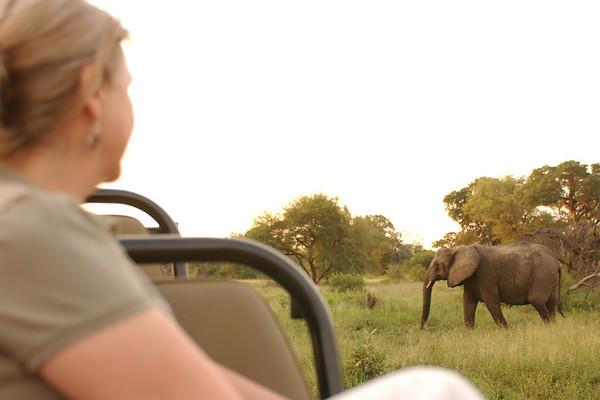 2 jeannie elephant 18