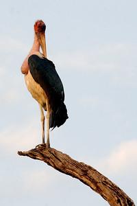2 stork 3