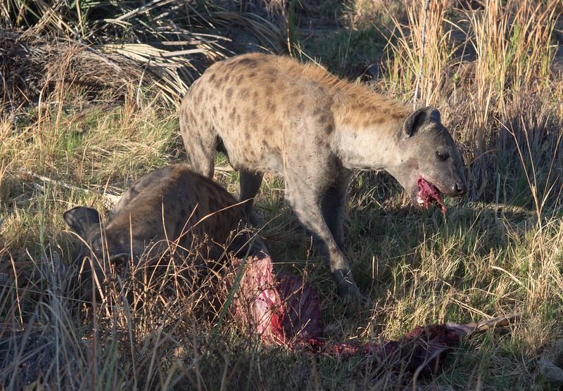 Hyena and Impala Kill
