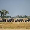 Elephants at Xaranna