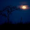 Chobe Moonrise!