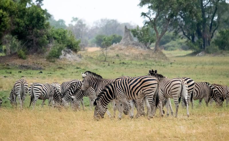 Zebra at Xaranna