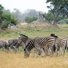 Zebra at Xaranna