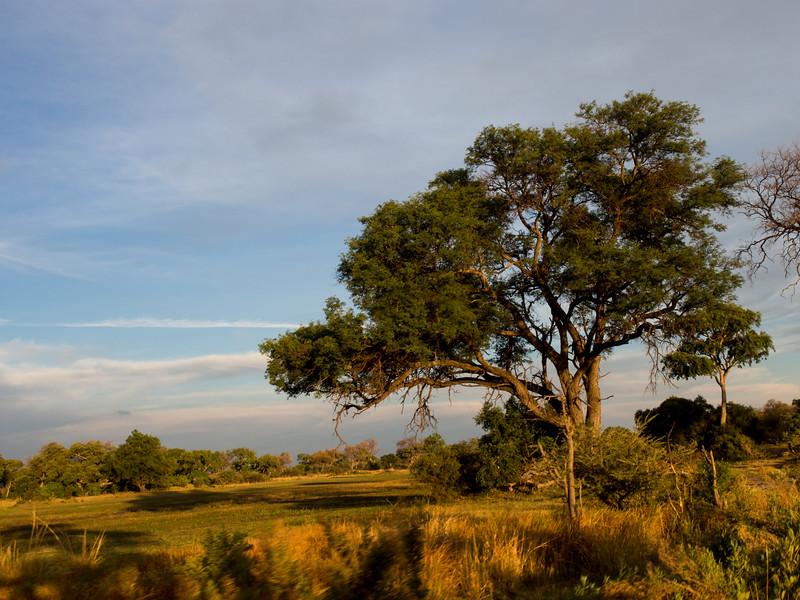 Okavango Scene