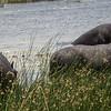 Resident Hippos at Xaranna