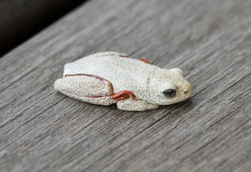Toad on Xaranna Deck