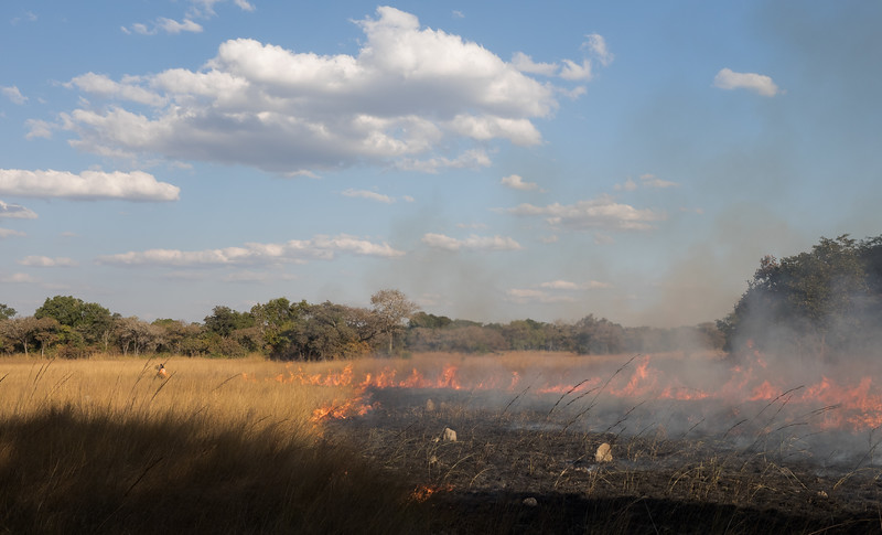 Kasanka NP controlled burning