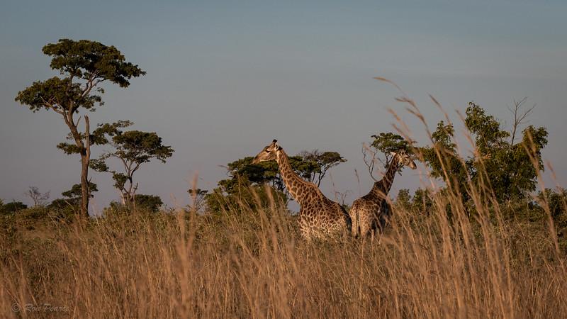 Hawange National Park
