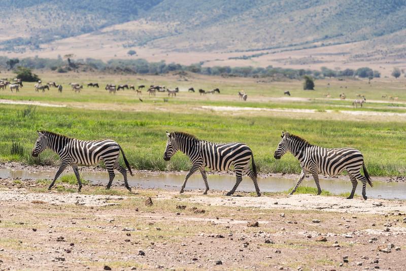 Welcome to Tanzania