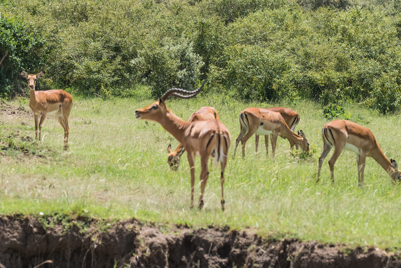 Our Kenya Experience